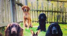 كلاب شقيق كيت ميدلتون