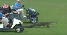 عربات الجولف ترافق التمساح