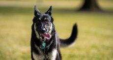 كلب _ صورة أرشيفية