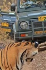 نمر يفاجئ مجموعة من المصورين