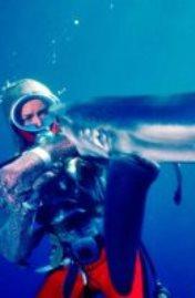 فاليرى تايلور وسمكة قرش